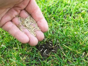 regarnir pelouses conseils