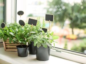 jardin aromatique au balcon